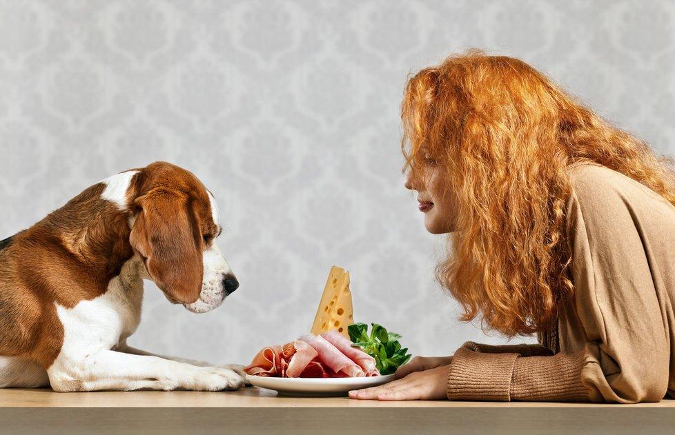 9 alimentos que no debes dar a tu perro