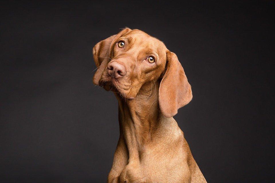 El sexto sentido de los perros: 5 cosas extrañas que pueden percibir y que la mayoría de los humanos no