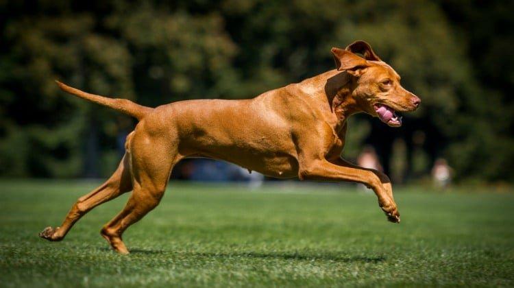 ¿Cuánto ejercicio necesita un perro todos los días?