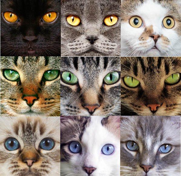 ¿Por qué los colores de los ojos de los gatos son diferentes?