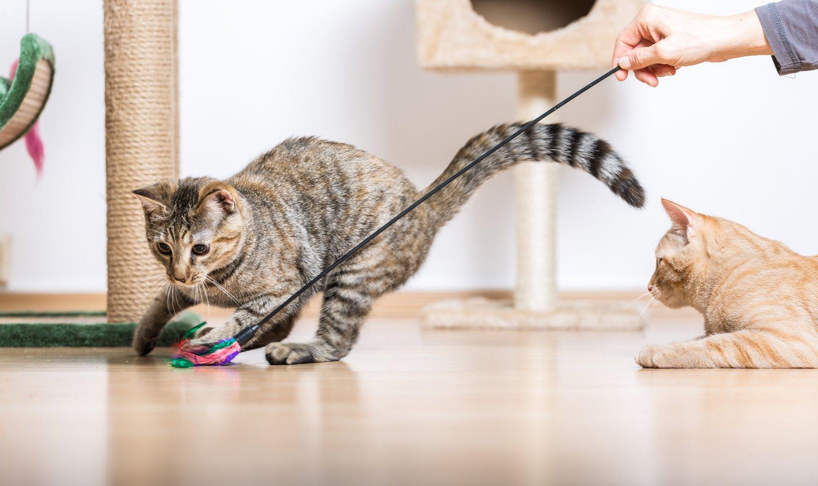 Los mejores juguetes para gatos disponibles en Amazon